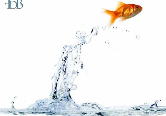 pesce_fuor_d'acqua